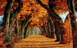 autumn desktop wallpaper (2)