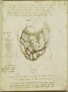 Davinci abdomen