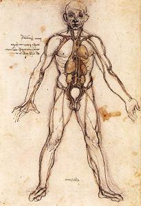 Davinci circulatory system